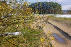 Early spring. Landscape with tree buds and snow visible Stock Image