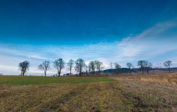 Early spring meadow with barbed wire fence at sunset Royalty Free Stock Photography