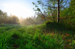 Early Spring morning meadow Royalty Free Stock Photo