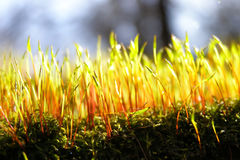 Early spring moss Royalty Free Stock Photos