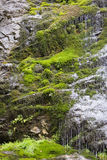 Early spring mossy forest rock waterfall Stock Photography