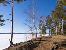 Early spring, naked forest on the shore by lake still covered with show and ice. Pine trees and birches, cloudless blue stock images