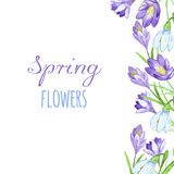 Early spring purple crocus and snowdrops nature beauty flowers vector. Crocus snowdrops flower color and purple crocus bouquet petal natural bloom. Pring Stock Photo