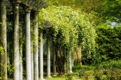 Early spring at the rose garden. Mystical ancient garden with columns draped in flowers Stock Photo