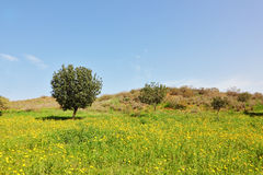 Early spring in southern Israel. Stock Photography