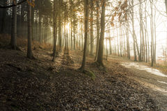 Early spring sunset with god rays in the forrest Royalty Free Stock Photography