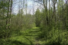 Grassy hiking trail through woodlands. Early spring trees along path through natural woodlands in Rochester, New York royalty free stock photography