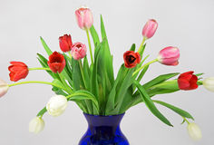 Early Spring Tulip Bouquet Stock Image