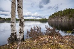 Early spring vegetation on the lake shore. Early spring vegetation by the lake, with birch tree and steep rock in the background. Taken along the Bergslagsleden Royalty Free Stock Image