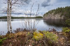 Early spring vegetation on the shore of the lake. Early spring vegetation by the lake, with birch tree, moss and lichen, and steep rock in the background. Taken Royalty Free Stock Images