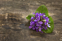 Spring violets flowers Royalty Free Stock Photos