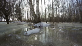 Early spring water flood in birch forest, time lapse 4K stock video footage