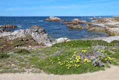 Early spring wildflowers near Asilomar State beach in Pacific Gr Royalty Free Stock Images