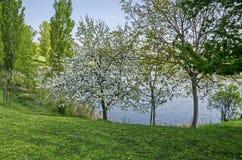 Early springtime green on a beauty lake in district Drujba. Sofia, Bulgaria royalty free stock photos