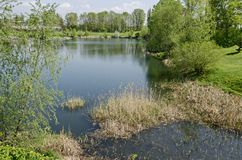 Early springtime green and dry reed or rush on a beauty lake in district Drujba. Sofia, Bulgaria stock photos
