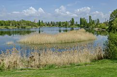 Early springtime green, dry reed or rush and house on a beauty lake in residential district Drujba. Sofia, Bulgaria royalty free stock image