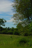 Early summer field bathed in early sunshine. Green trees yellow flowers royalty free stock images