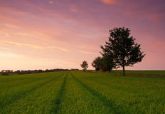 Early summer field at sunset. Royalty Free Stock Photos