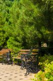 Early summer landscape, old Park, benches, trees, bushes, green grass, bright green leaves. Early summer landscape, old Park, benches, trees, bright green leaves stock image