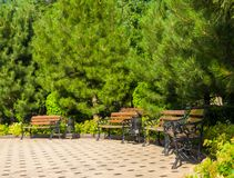 Early summer landscape, old Park, benches, trees, bushes and bright green leaves. Early summer landscape, old Park, benches, trees, bushes, green grass and royalty free stock image