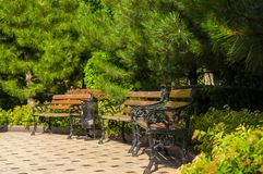 Early summer landscape, old Park, benches, trees, bushes, green grass, bright green leaves, solar spot light. Early summer landscape, old Park, benches, trees stock photo