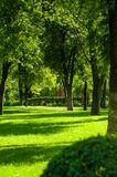 Early summer landscape, old Park, trees, bushes, green grass, bright green leaves. Solar spot light royalty free stock photography