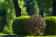 Early summer landscape, old Park, trees, bushes, green grass, bright green leaves. Solar spot light royalty free stock image