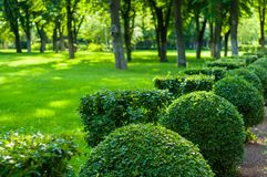 Early summer landscape, old Park, trees, bushes, green grass, bright green leaves. Solar spot light royalty free stock photo