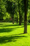 Early summer landscape, old Park, trees, bushes, green grass, bright green leaves. Solar spot light stock photos