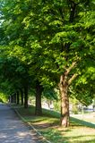 Early summer landscape, old Park, trees, bushes, green grass, bright green leaves. Solar spot light stock images