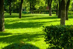 Early summer landscape, old Park, trees, bushes, green grass, bright green leaves. Solar spot light royalty free stock photos