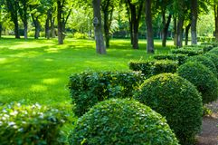 Early summer landscape, old Park, trees, bushes, green grass, bright green leaves. Solar spot light stock image