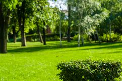 Early summer landscape, old Park, trees, bushes, green grass, bright green leaves. Solar spot light stock photo