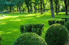 Early summer landscape, old Park, trees, bushes, green grass, bright green leaves. Solar spot light royalty free stock images