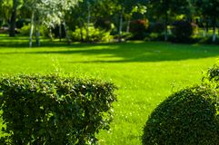Early summer landscape, old Park, trees, bushes, green grass, bright green leaves. Solar spot light stock photography