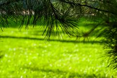 early summer landscape, old Park, trees, bushes, green grass, bright green leaves stock images