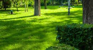 Early summer landscape, old Park, trees, bushes, green grass, bright green leaves. Solar spot light stock image