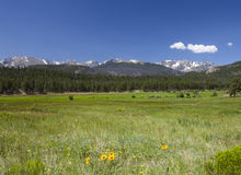 Early Summer in the Rockies Royalty Free Stock Image