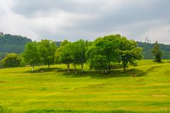 Early Summer scenery of Mulan grassland Scenic spot in Wuhan, Hubei Province, China stock photos