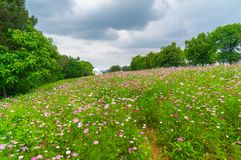Early Summer scenery of Mulan grassland Scenic spot in Wuhan, Hubei Province, China stock images