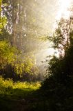 Early summer sunlight breaking through the trees at a mystical lane. Relaxation view royalty free stock image