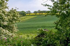 Early summer view of rolling English countryside. Early summer view across the rolling English countryside of the Lincolnshire Wolds royalty free stock image