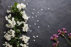 Early summer white and pink flower blossoms on slate Royalty Free Stock Image