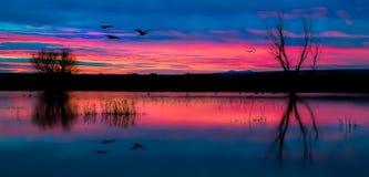 Early sunrise. Bosque del Apache in the winter Stock Photo