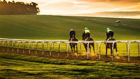 Living Daylights Early-To-Rise Champions stock image
