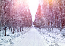 Early winter country road afternoon Royalty Free Stock Photos