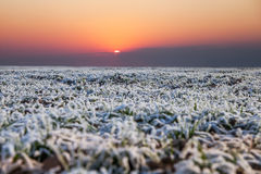 Free Early Winter In Wheat Field. Royalty Free Stock Images - 47612549
