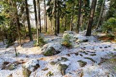 Free Early Winter Landscape In Sweden Royalty Free Stock Images - 80125999