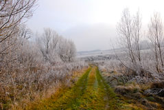 Early winter landscape with road, frosted plants and trees Royalty Free Stock Image