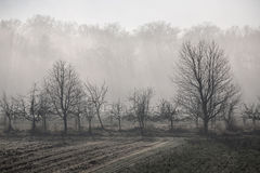 Early winter leafless trees on a field. Under the morning sun royalty free stock photos